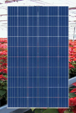 Transparent Photovoltaic Modules to 60 cells